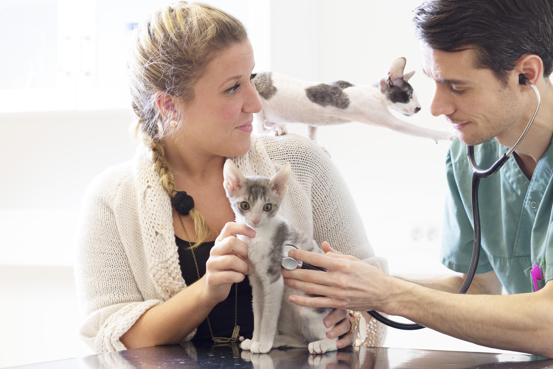 Informatie over de verzorging van je dier